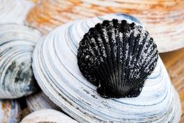 beach_seashells01