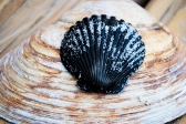 beach_seashells02
