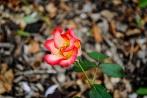 flower_brooklyn01