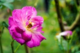 flower_brooklyn02