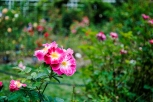 flower_brooklyn03