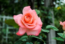 flower_brooklyn04