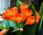 flower_cameilla02
