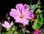 flower_clark