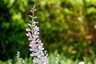 flower_ncma02