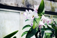 flower_orchid01