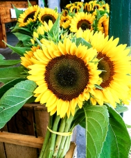 flower_sunflower